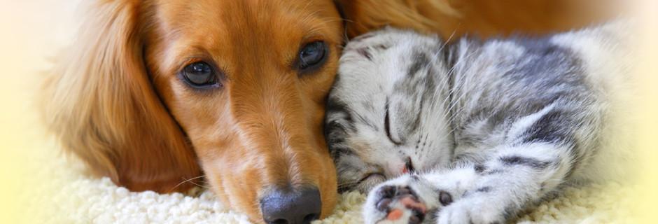 ペットの「トータルヘルスケア」をコンセプトに大切なパートナーの健康に役立つ商品をご提供いたします。